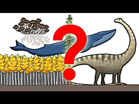 What is the Largest Organism on Earth?