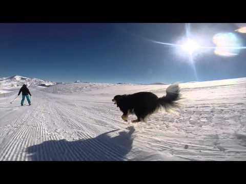 hqdefault - Hoy nos vamos con este tipo que esquia junto a su perro