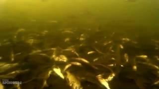Рыбалка озеро бельское бронницы