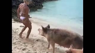 Дикая свинья укусила фитнес-модель Мишель Левин за ягодицу