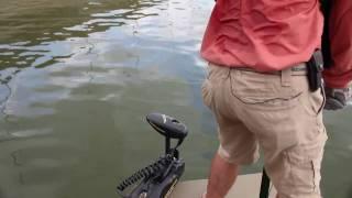 Watch Video - Bighead Carp Bowfishing and Recipe 2010 Pt 1
