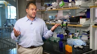 Newswise:Video Embedded molecular-hitchhiker-on-human-protein-signals-tumors-to-self-destruct