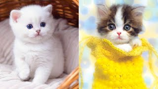 Baby Cats - Cute and Funny Cat Videos Compilation #29   Aww Animals