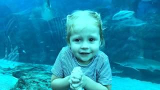 Океанариум с Акулами ВЛОГ для детей Поймали покемонов и Гигантский ОСЬМИНОГ и рыбка ДОРИ vlog