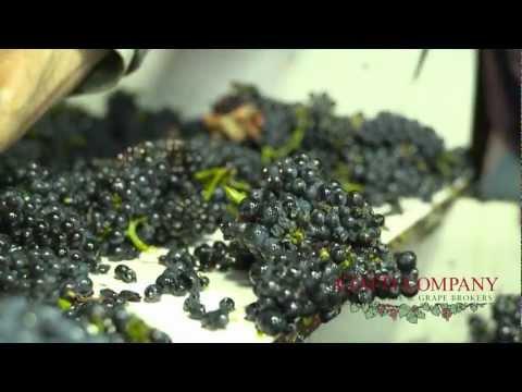 Central Valley: Feb 2012 California Grape Report