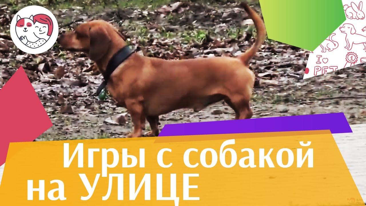 Игры для собак на свежем воздухе на ilikepet