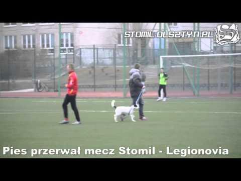 Pies przerywa mecz Stomil Olsztyn - Legionovia Legionowo