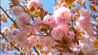 You're Beautiful [HQ Audio]   James Blunt
