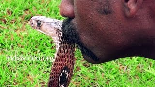 Man Kissing Cobra | Adventurous Activities