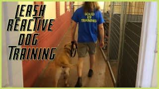Leash Reactive Dog How To Dog Training