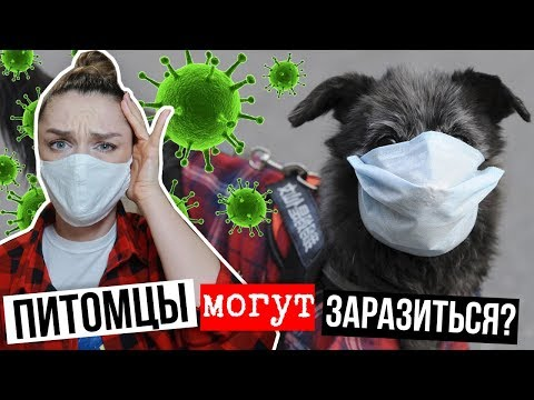 КОРОНАВИРУС И ДОМАШНИЕ ПИТОМЦЫ/Животные могут заразиться?/Карантин для собачников
