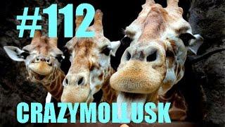 Лучшие приколы 2014 #112 - Приколы с животными