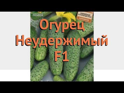 Огурец обыкновенный Неудержимый F1 🌿 обзор: как сажать, семена огурца Неудержимый F1