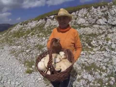 Il fungo del milkwoman come trattare