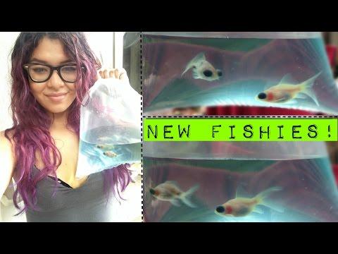 new fish!