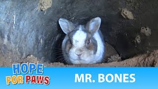 A rescue at the cemetery reveals a beautiful bunny under a grave.
