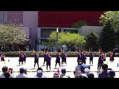 小柳保育園ばら組 @ AOMORI春フェスティバル (青森駅前公園) 2019-05-05T09:54