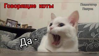 Говорящие коты! Лучшая подборка №4  (внимание! 18+)