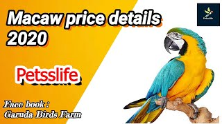 Types of macaw with price/ varieties of macaw/macaw