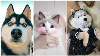 Tik tok Trung Quốc - Tik tok động vật - Thư giãn cùng boss cưng đáng yêu [P3]