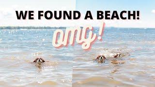 A DOG FRIENDLY BEACH IN QUEBEC?! // Cavalier King Charles Spaniel Vlog August 1