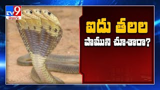 Five Headed Snake News In Social Media | Edi Viral Edi Real | TV9