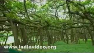 Great Banyan tree, a wonder in plant kingdom and its surroundings