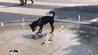 Hunde Don Quijote Kampf gegen Springbrunnen