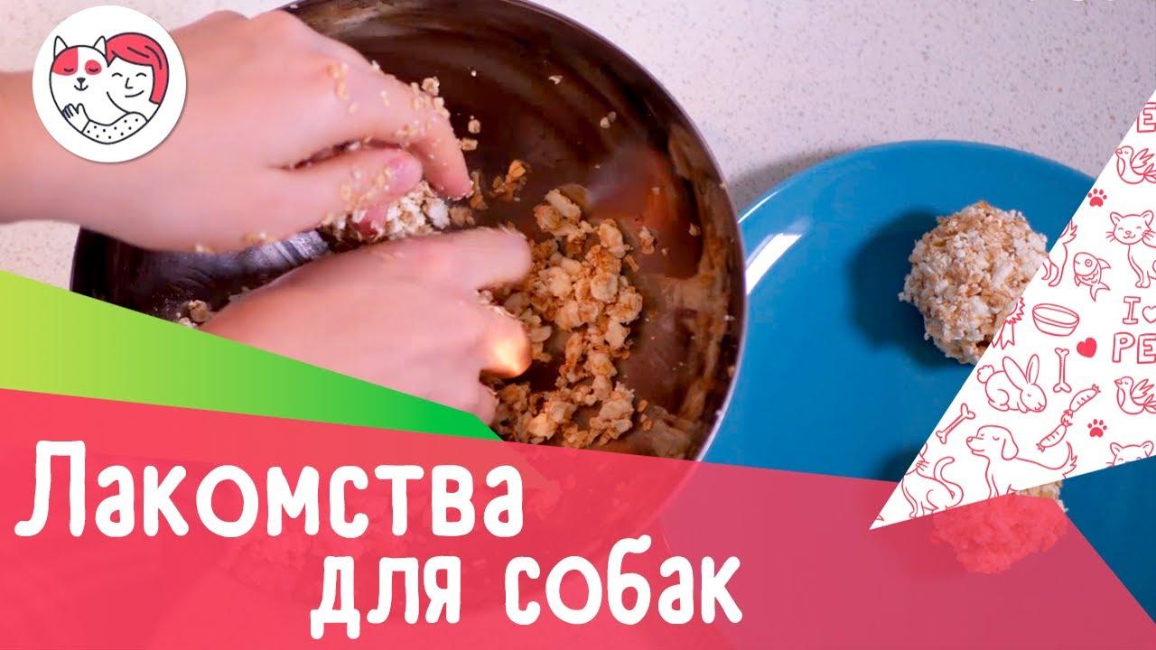 3 рецепта собачьих лакомств: как порадовать питомца в домашних условиях