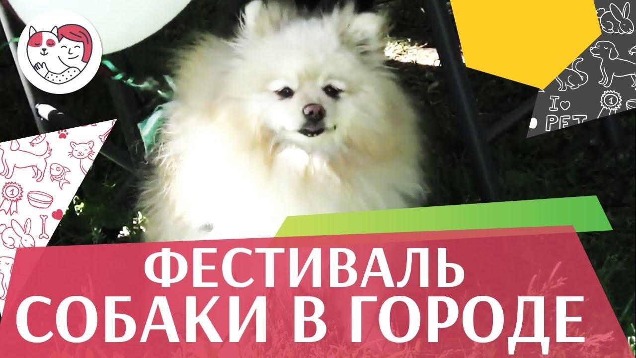 Фестиваль «Собаки в городе» на ilikepet