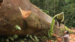 Bắc Cạn kiên quyết xử lý các sai phạm liên quan vụ phá rừng ở Vườn Quốc gia Ba Bể