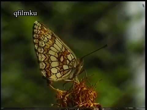 Orr laphám papilloma