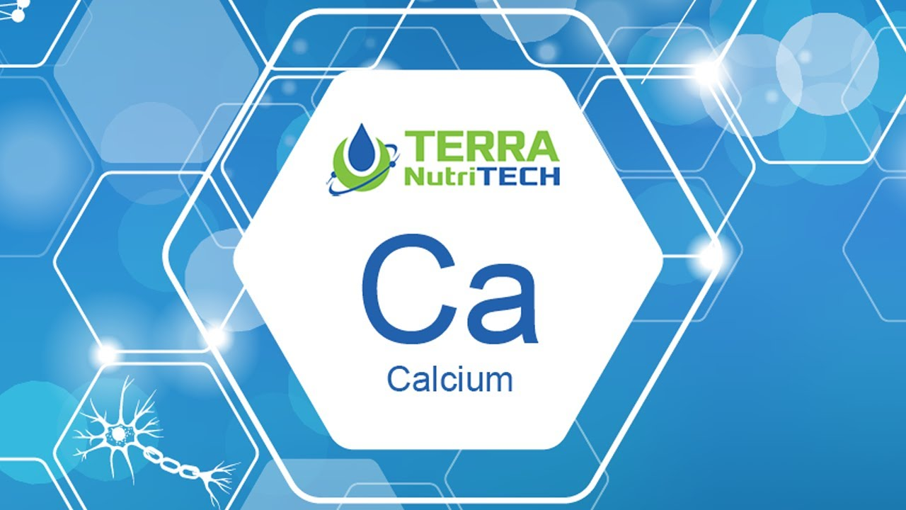 Why is Calcium so Important for Animal Health during Calving Season?