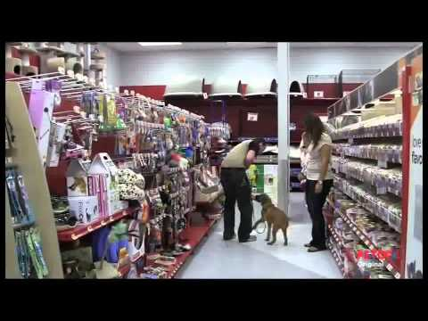 Petco Dog Training Class Overview - YouTube