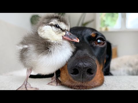 An Unlikely Friendship Between Two Very Different Pets