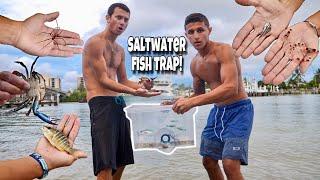 Fish Trap Catches AQUARIUM FISH and INVERTEBRATES!!