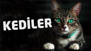 Sessiz Muhafızlar: Kediler