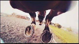 Gopro horse girth