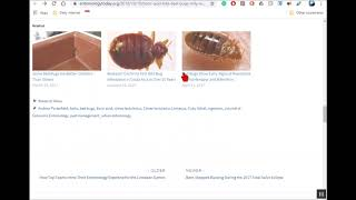 Does Boric Acid Really Kill Bed Bugs & German Roaches. See lab results.