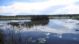 Отдых на природе в Талдомском районе.
