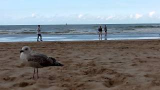 preview picture of video 'Ostende 2014'