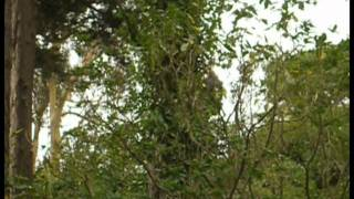 preview picture of video 'Adrenalin Forest Porirua'