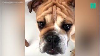 Sur Instagram, Florence Foresti se lance dans un sketch hilarant avec son nouveau chien