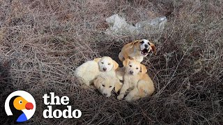Couple Won't Give Up Trying To Catch Stray Puppy | The Dodo Faith = Restored