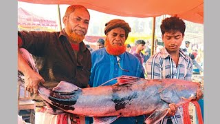 preview picture of video 'Largest fish's fair in Habiganj-Bangladesh (1)'