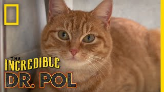 A Stray Cat Finds a Home | The Incredible Dr. Pol