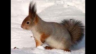 Смешная милая белочка встречает весну. Funny squirrel eats.