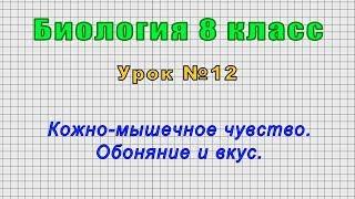 Биология 8 класс Урок 12