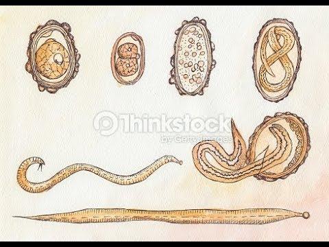 Tisztítás vírusoktól és parazitáktól