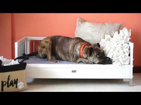 New Age Pet Raised Dog Bed with Memory Foam Cushion - Espresso Large Video